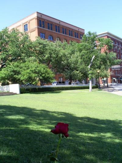 A single red rose on the Grassy Knoll in front of the former Texas School Book Depository (now the 6th Floor Museum).